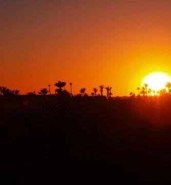 Descrubre el palmeral de Marrakech