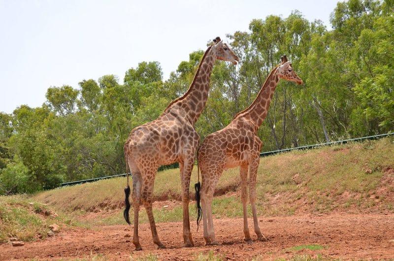 El zoo de Rabat Marruecos